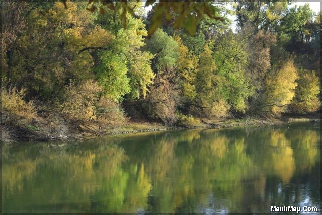 mặt hồ nước với hình bóng hàng cây mùa thu
