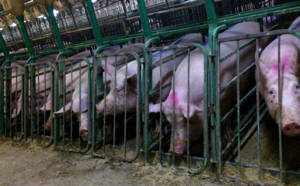 Animal Suferring