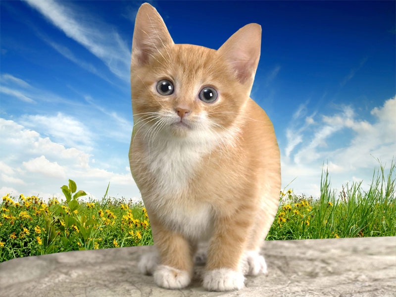Excellent Wallpapers Cat Desktop Wallpapers