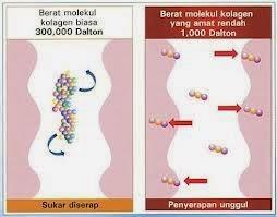shaklee collagen molekul kecil mudah meresap