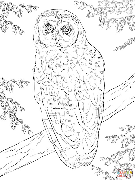Click The Northern Spotted Owl Coloring Pages To View Printable Version Or  Color It Online Patible With Ipad And Android Tablets