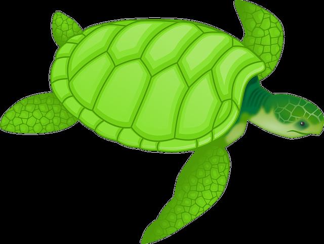 Prema japanskom verovanju kornjača je simbol dugovečnosti. Oslonac je  sveta 86105059317