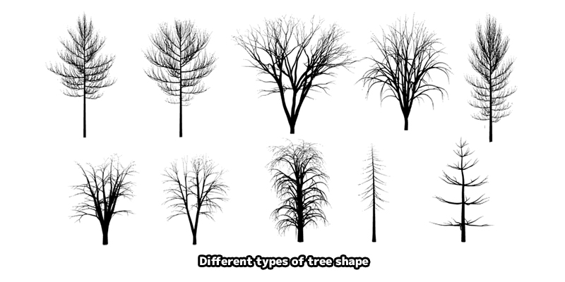 tree shapes