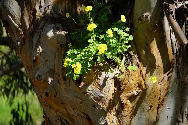 עץ בשפך נחל שורק