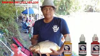 Essen Yang Paling Gacor Untuk Ikan Mas