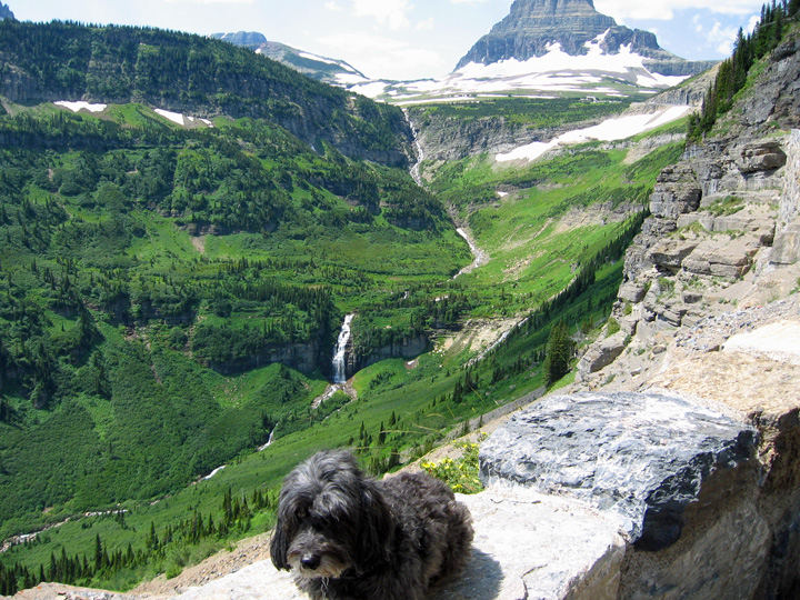 Skruffy Glacier National Park