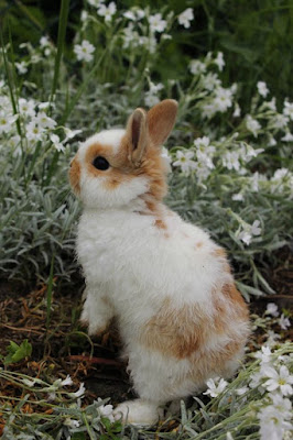 What is the smallest breed of Rabbit