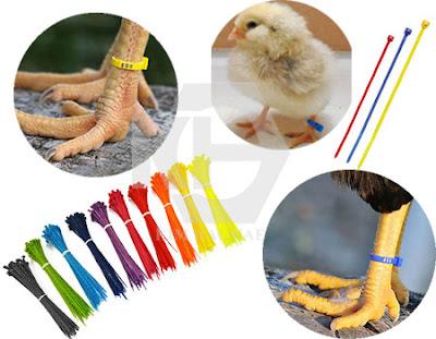 Dây thít nhựa nhiều màu đánh dấu hàng hóa