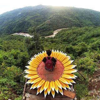 Spot Foto Bunga Matahari di Bukit Mojo Gumelem