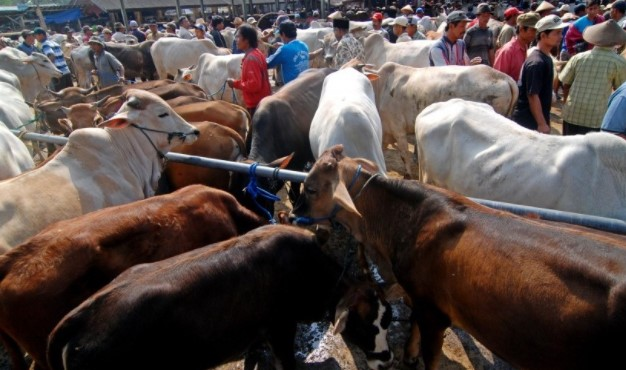 Daftar Pasar Ternak Di Indonesia