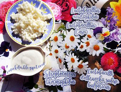 Lactobacilli benefici del Kefir di latte