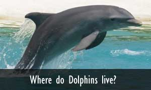 Where And How Long Do Dolphins Live
