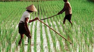 Petani di OKI Keluhkan Pungli