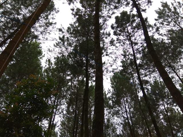 Pentingnya Menjaga Kelestarian Hutan Untuk Menjaga Keanekaragaman Hayati