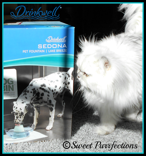 Truffle demonstrating the Drinkwell® Sedona Fountain