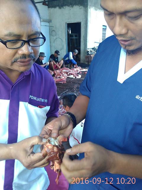Pemeriksaan Postmortem Hati Sapi Qurban oleh drh.H. Puput Rijalu dan drh. Hendrie