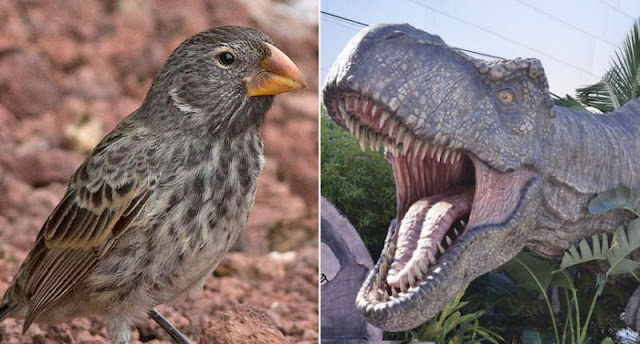 T. rex bite 'no match for a finch'