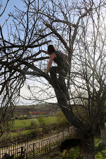 A climbs up to clear more dead branches