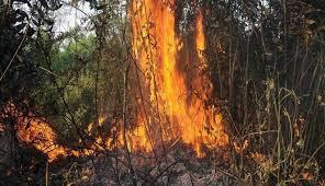 poto mencegah kebakaran hutan