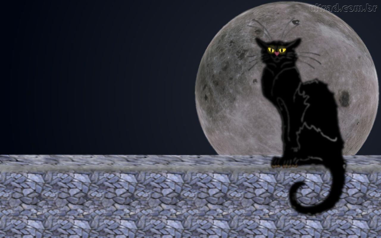 imagensnet papel de parede dos gatinhos fotos de gatos tumblr para