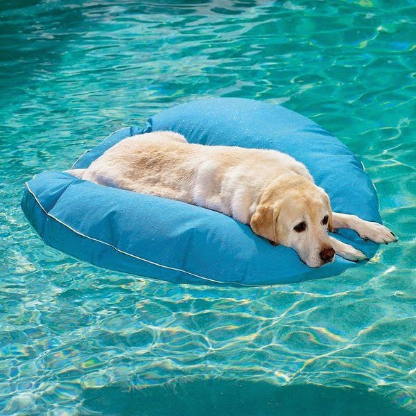 Summer S Best Pool Floats