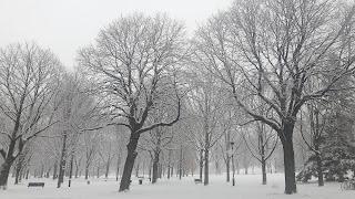 Arbre, neige, parc Ahuntsic