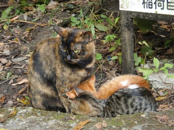 kittens kawaii pics