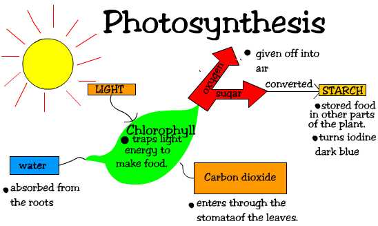 Diagram With Inputs And Outputs Of Photosynthesis Process Street Signs Venn Irisa Zusi Plant Growing Input Output It Is An Extremely Complex Consisting Many Coordinated Biochemical Reactions Without None Us Would Be Alive Today