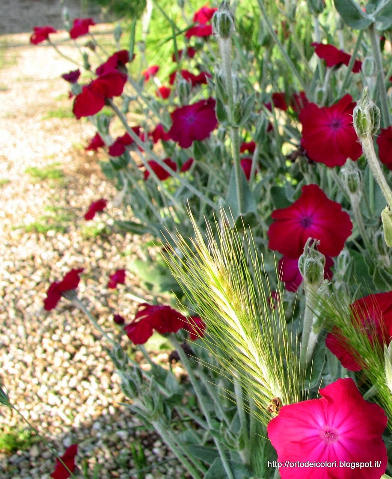 L 39 orto dei colori fiori da cortile for Nomi piante da giardino