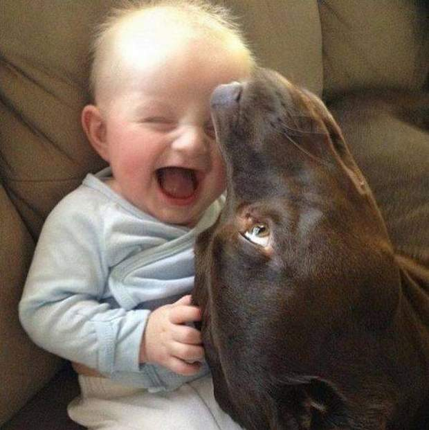 Cute dogs - part 118, cutedog photo, best pictures of dogs