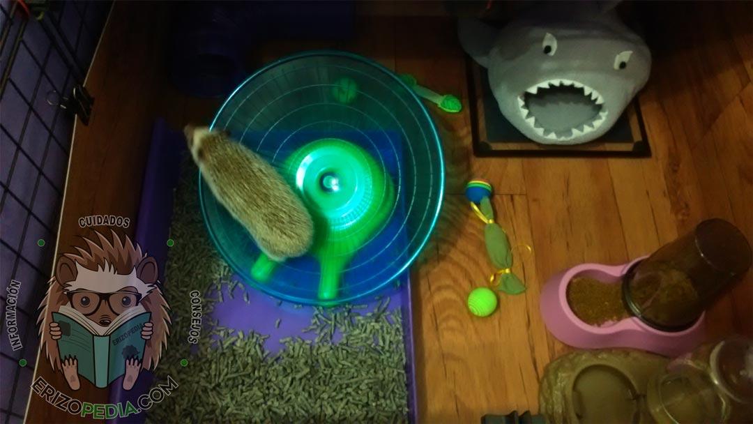 Foto de un erizo de tierra corriendo en un disco
