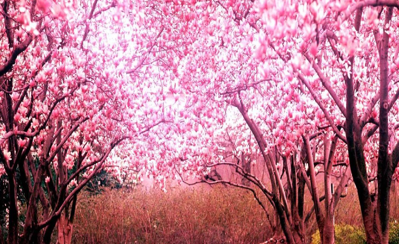 Unduh 9000 Wallpaper Bunga Terindah Di Dunia  Terbaru