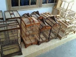 Burung Cendet - Pemilihan Sangkar Haian Bagi Burung Cendet - Perawatan Burung Cendet - Penangkaran Burung Cendet