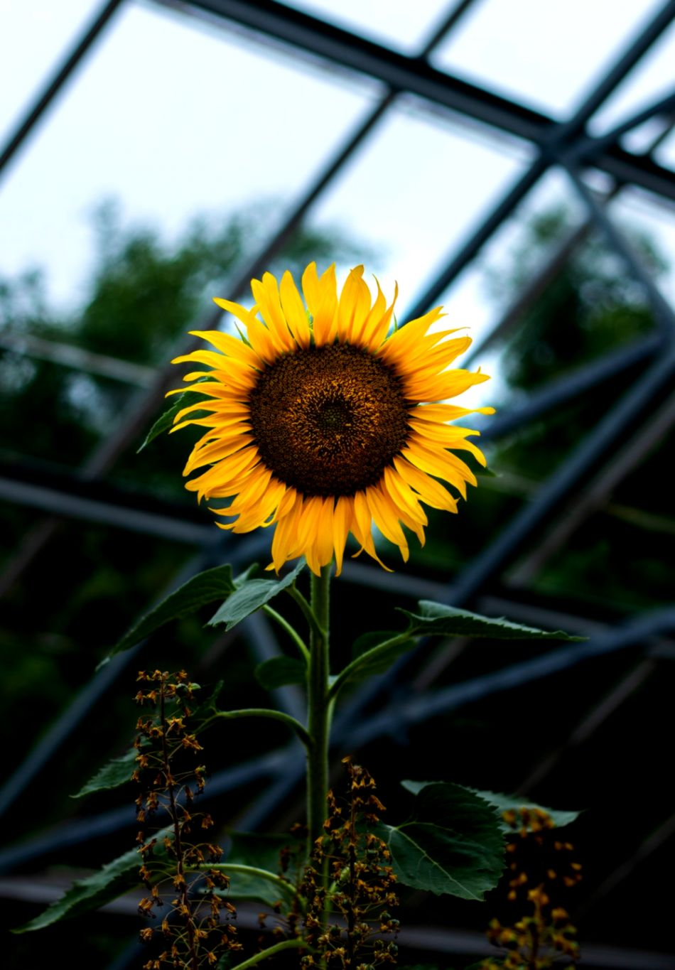 Photography Sunflower Wallpapers