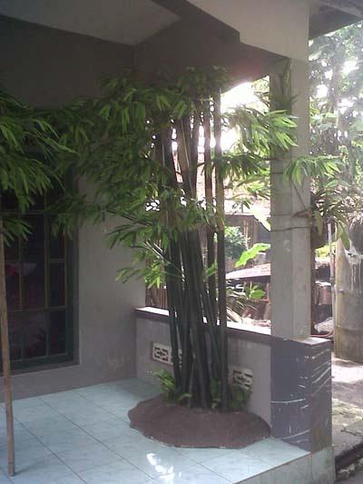 Pohon Bambu Tiruan / Artifisial dibuat dari fiberglass resin