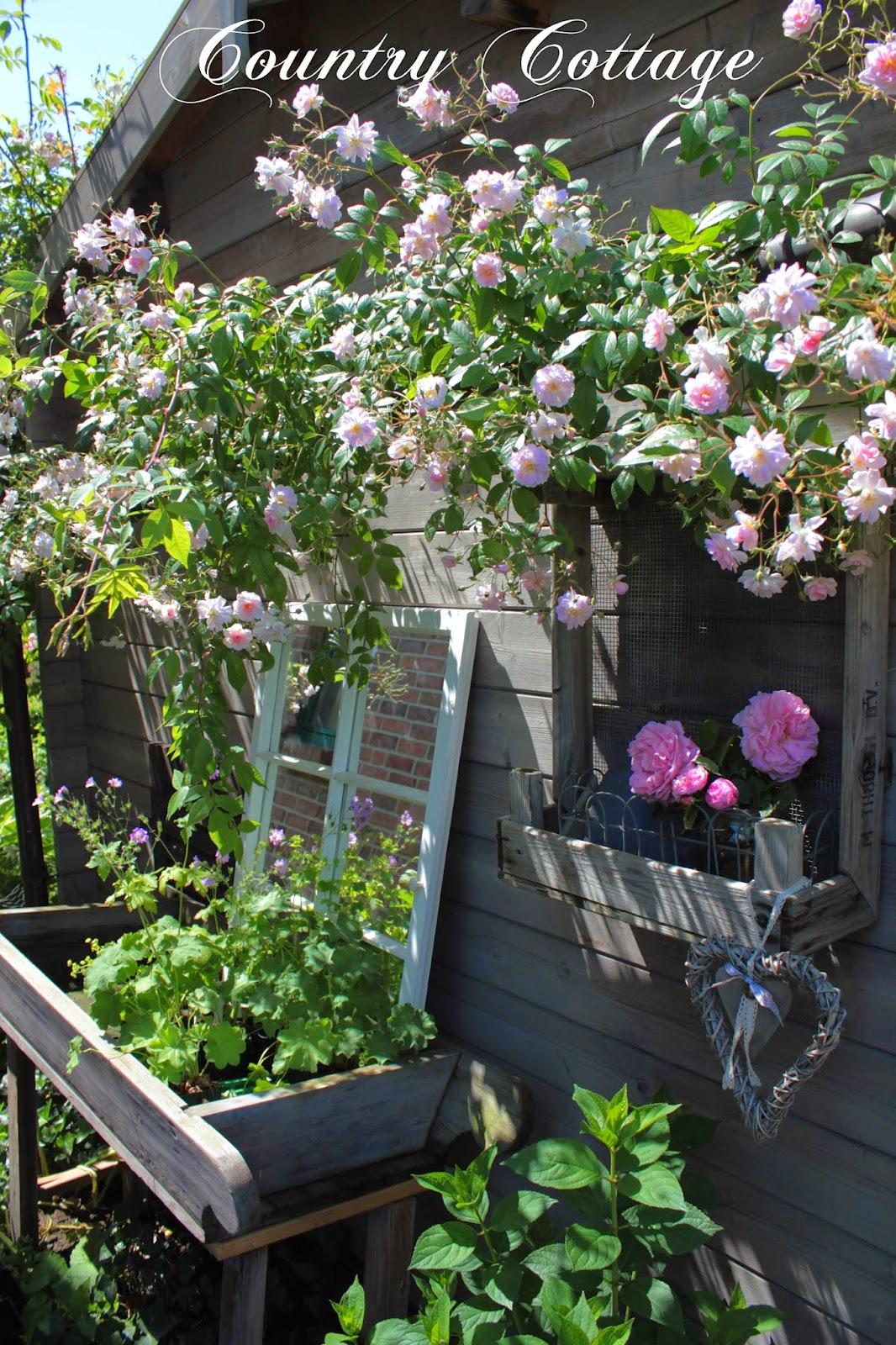 Roses For My Garden ;) On Pinterest