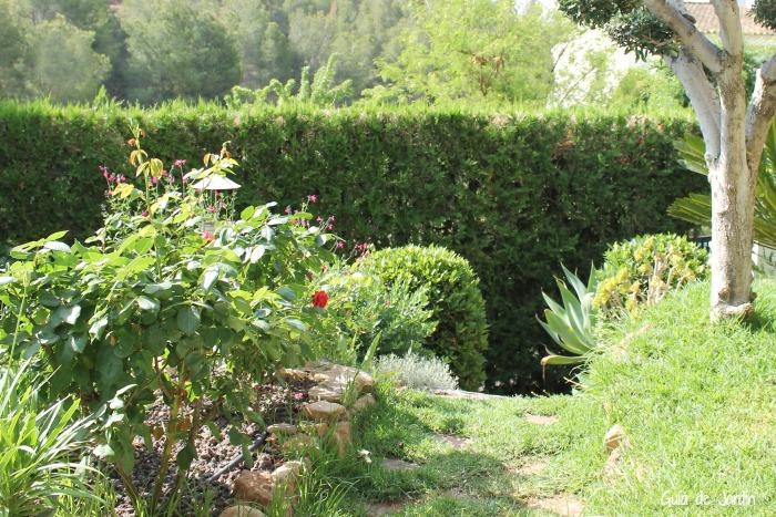 Trucos e ideas para diseñar un jardín pequeño - Guia de jardin