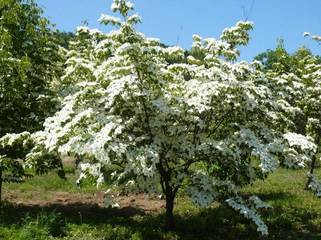 Il giardino delle naiadi giardini di piccole dimensioni for Alberi per piccoli giardini