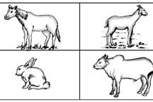 Cara Hewan memperoleh makanannya