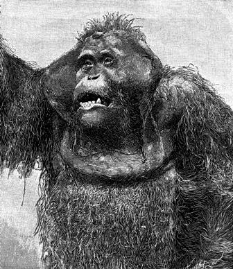Orangutans and Edgar Allan Poe | Deadly Kingdom