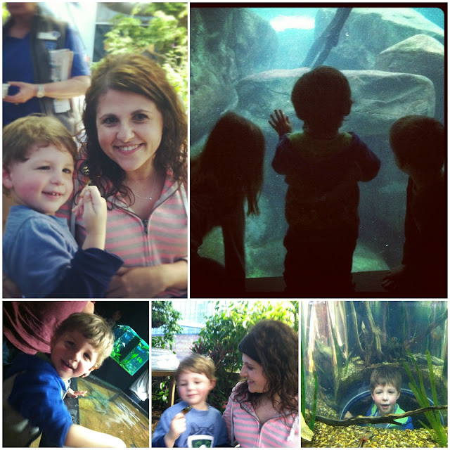 chatanooga aquarium