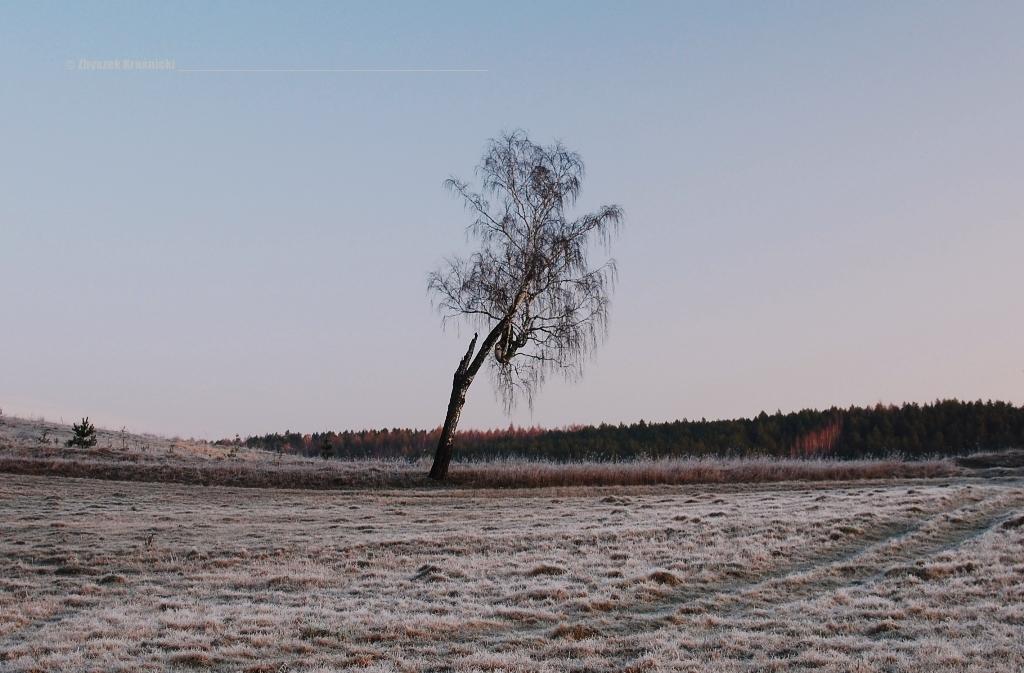 Warmińskie pola