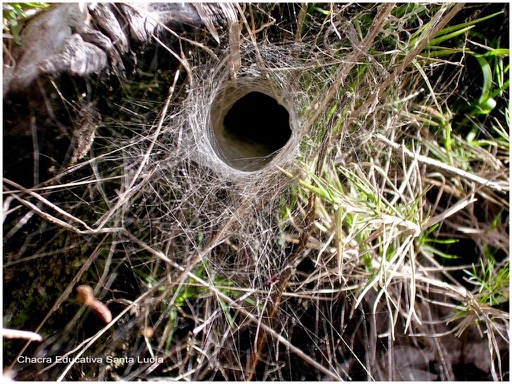 Tela de araña en forma de tubo - Chacra Educativa Santa Lucía