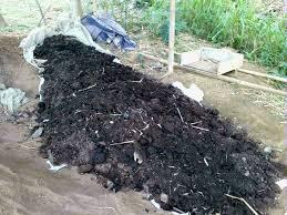 Pengaruh Pupuk Bokashi Kayu Apu Terhadap Pertumbuhan dan Hasil Tanaman Cabe Rawit