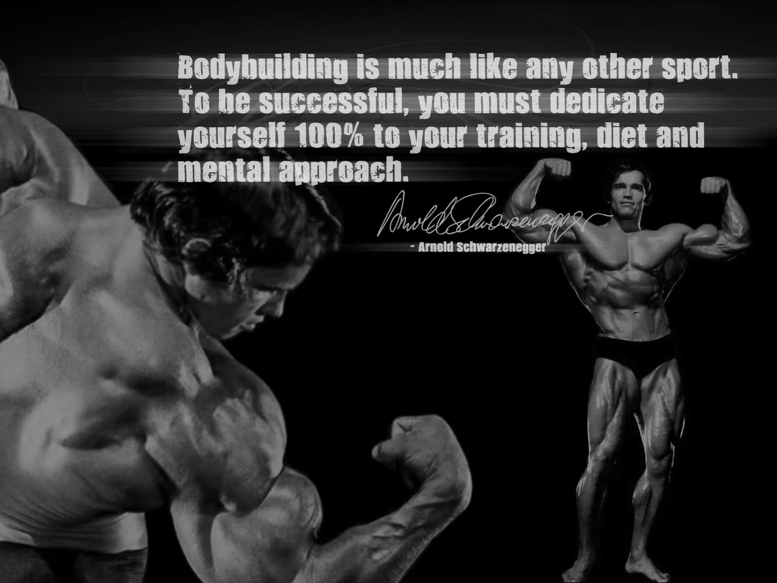Animal Pak Quotes Wallpaper Arnold Schwarzenegger Fitness Quotes Quotesgram