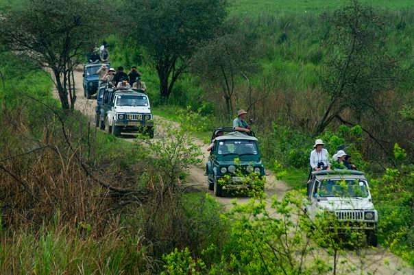 Tourists at Kaziranga National Park (photo - Nassif Ahmed)