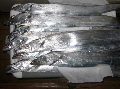 関西の船釣りで釣れる 竿とリール