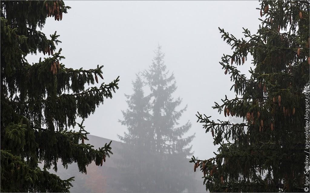 Болгария Пампорово Родопы Родопи горы осень туман