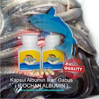 Albumin ikan gabus ekstrak sebagai salah satu makanan bergizi untuk ibu hamil
