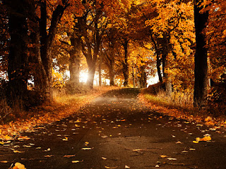 Beautiful Tree highway Nature Wallpapers